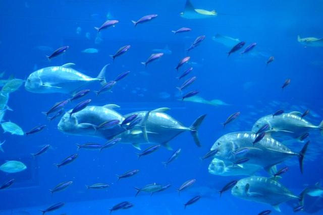 青魚に含まれるビタミンB群